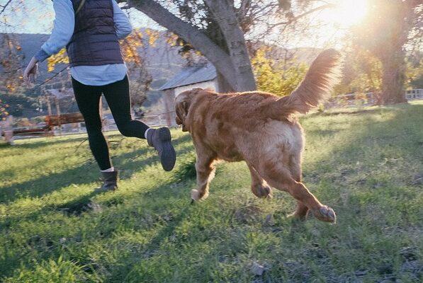 Sjov motion med hund